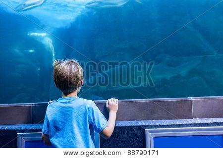 Young man looking at shark in a tank at the aquarium