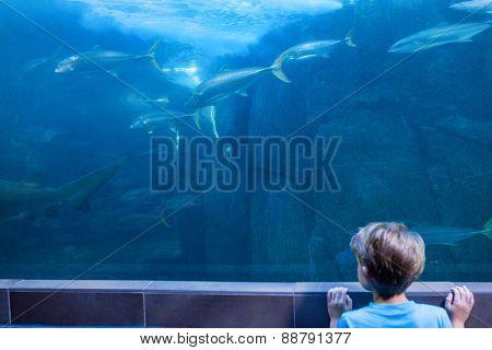 Young man looking at fish swimming at the aquarium