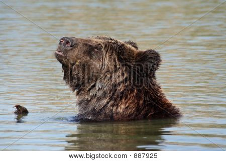Bear In The Lake