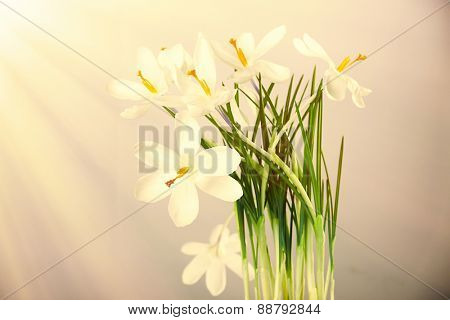 Bouquet of spring flowers on light background