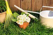 picture of primrose  -  Garden rake - JPG