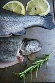 picture of brook trout  - trout on metal table with lemon and rosemary - JPG
