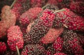 picture of mulberry  - Close up of organic mulberry vintage mulberry  - JPG