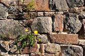 picture of mortar-joint  - Big wall of carved natural stone in the sunlight - JPG