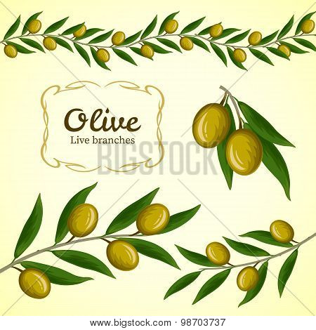 Vector Collection Of Olive Branch, Green Olives