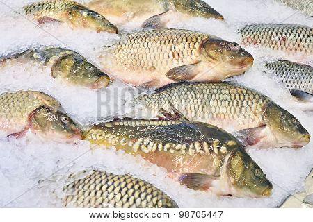 Carp Fish Lie On Ice In Supermarket Store
