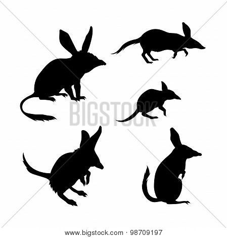 Bandicoot vector silhouettes.