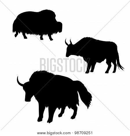 Yak vector silhouettes.