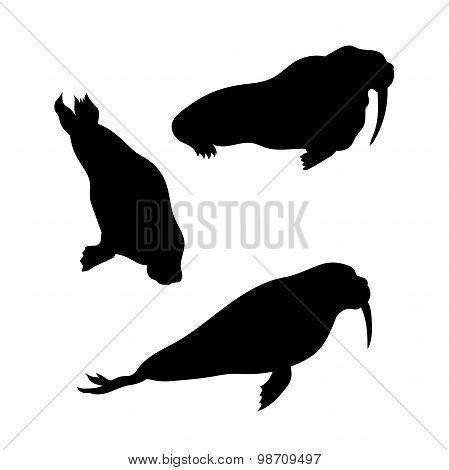 Walrus vector silhouettes.