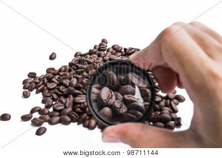 magnifying roasted coffee beans, abstract concept of chosen the quality of coffee beans product