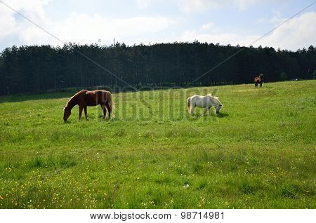 Three Horses On Green Field