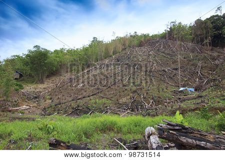 Deforestation environmental damage destruction of rainforest