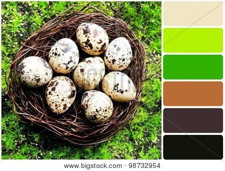 Bird eggs in nest on green grass  and palette of colors