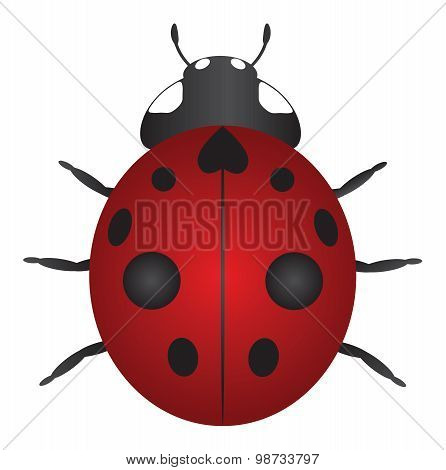 Red Ladybug Color Vector Illustration