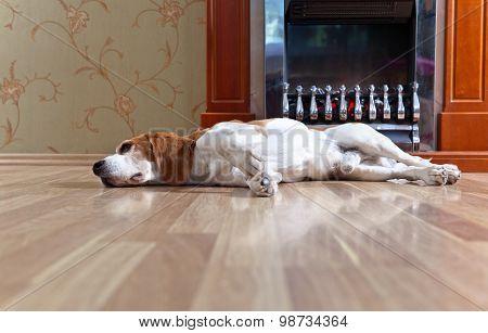 Dog Near To A Fireplace
