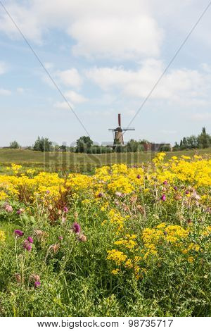 Dutch Rural Summer Landscape With A Windmill