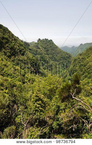 Levada Walk In Madeira Island