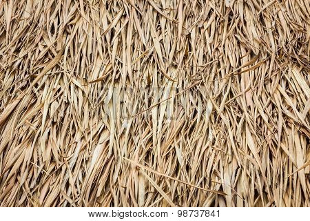 Roof Made Of Dried Leaves Of The Cogon Grass