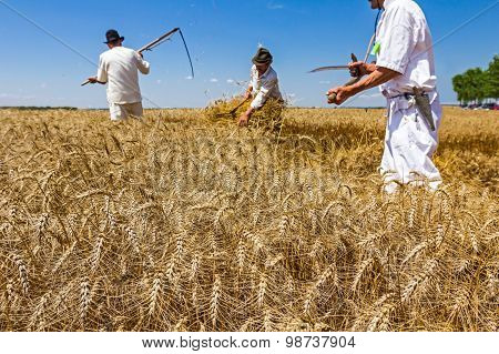 Two Farmers Are Cutting Wheat.