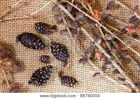 Fir Cones And Branches On Sacking