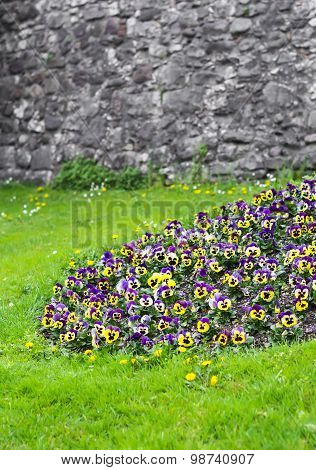 Green Lawn With A Flower Bed Of Pansies