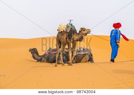 Dunes Erg Chebbi near Merzouga, Morocco - local guide and camels used for tours into the erg