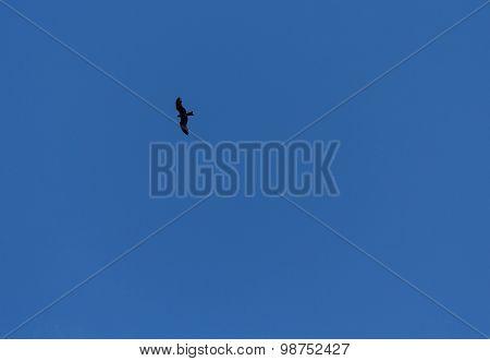 Silhouette Of A Bird Of Prey Against A Blue Sky