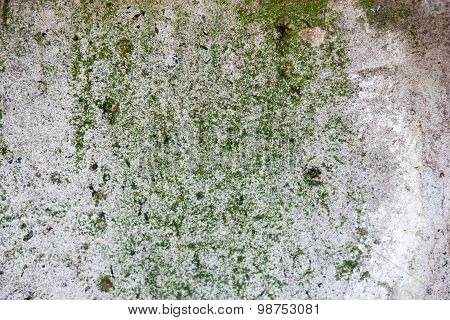 Concrete Surface With Green Moss And Rich And Various Texture