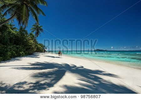 Tropical Sandy Beach With A Shadow Of The Coconut Palm Trees