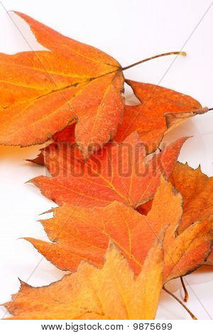 Autumn Fall Leaves