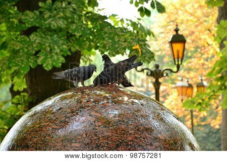 Three Funny Doves Drink Water From Round Fountain