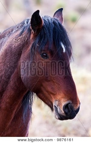 Wild Horse In Nevada Desert