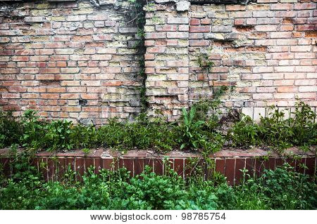 Brick Wall With Green Grass And Ivy.