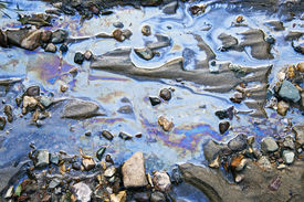 stock photo of water pollution  - water with different colored patches of gasoline and oil - JPG