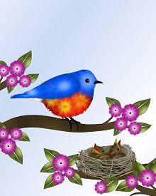 image of bluebird  - Orange and blue bird  - JPG