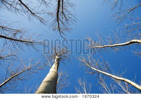 Trees Under Sky