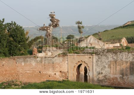 Ruins Of Cellah In Rabat With Storks