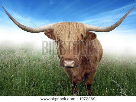 Шотландская горная волосатая корова - Стоковое фото #3521234. Ознакомьтесь