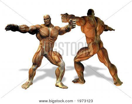Body Builder Anatomy Illustration