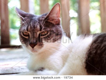 Cailin The Cat-annoyed