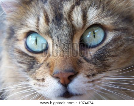 Expressive Cat Eyes