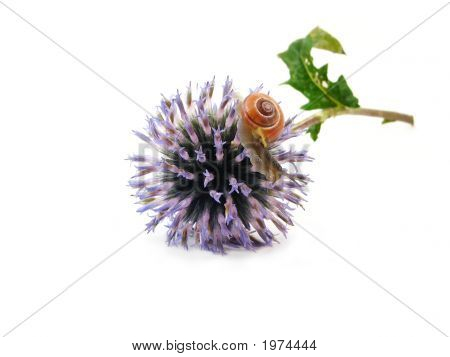 Slug On Blue Flower