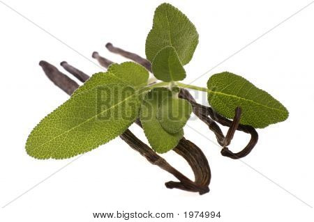 Fresh Sage And Vanilla Beans