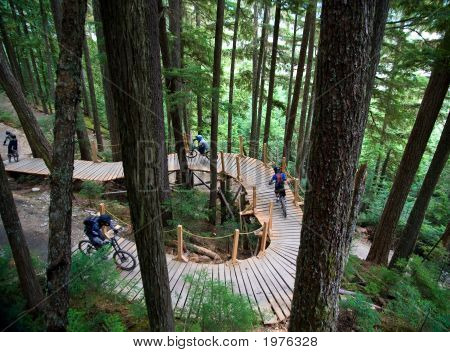 Bike Path Through Forest