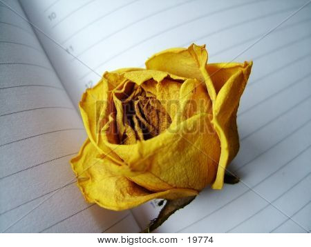 A Dried Yellow Rose On Book