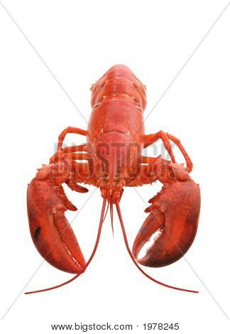 Isolated Lobster