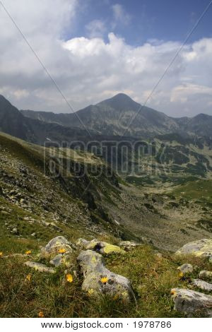 Mountain Landscape With Yellow Alpine Flowers