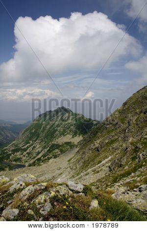 Mountain Landscape With Yellow Mountain Flowers