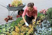 picture of potted plants  - Young woman planting out flowers sprouts in a garden - JPG