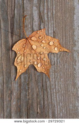 Maple Leaf On Old Deck Wood